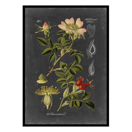 Midnight Botanical I Vintage Flowers Floral Illustration Print Wall Art By Vision Studio