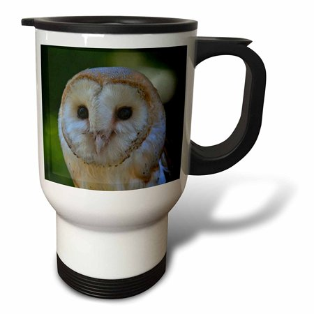 3dRose Barn Owl A close up portrait photograph of a barn owl against a green background, Travel Mug, 14oz, Stainless Steel