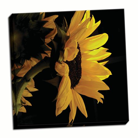 Gango Home Decor Contemporary Sunlit Sunflowers VIII by Monika Burkhart (Ready to Hang); One 16x16in Hand-Stretched - Sunflower Decor