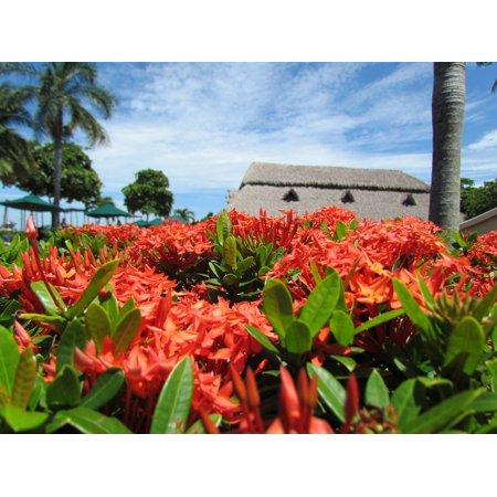 Palm Beach Flower (Canvas Print Hotel Sea Tourism Beach Flower Pool Palms Stretched Canvas 10 x 14 )