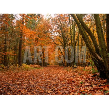 Beautiful Vibrant Autumn Fall Forest Scene in English Countryside Landscape Print Wall Art By Veneratio