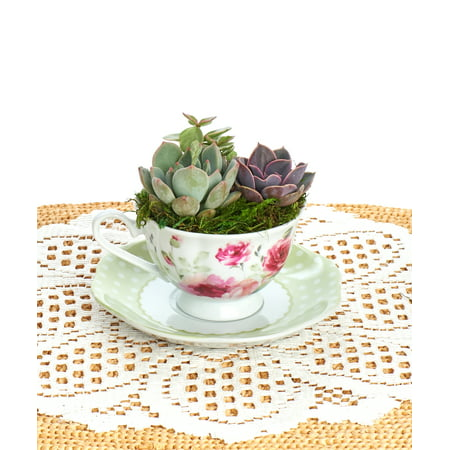Floral Tea cup and Polka Dot Saucer planted with Live Succulents | Arrangements | Tea Cups | - Cheap Tea Cups And Saucers