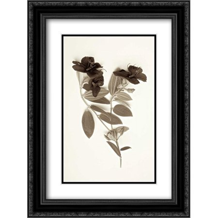 206 Matt - Garden Bloom - 6 2x Matted 18x24 Black Ornate Framed Art Print by Blaustein, Alan
