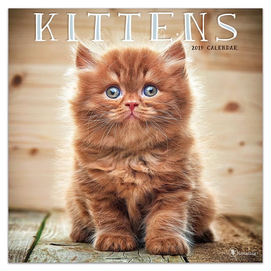"2019 Kittens 12"" x 12"" January 2019-December 2019 Wall Calendar"