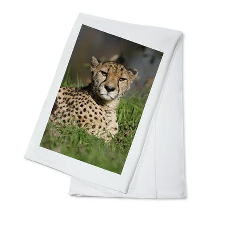 Cheetah in Grass - Lantern Press Photography (100% Cotton Kitchen Towel) ()
