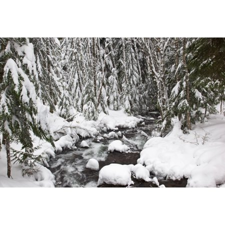 Winter Snow Along Still Creek In Mt Hood National Forest Oregon United States Of America Stretched Canvas - Craig Tuttle  Design Pics (19 x 12) ()