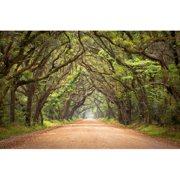 HDC International 'Tree Lined Road' Photographic Print on Wrapped Canvas