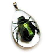 SD1105 Real Bug Necklace-Chafer Beetle