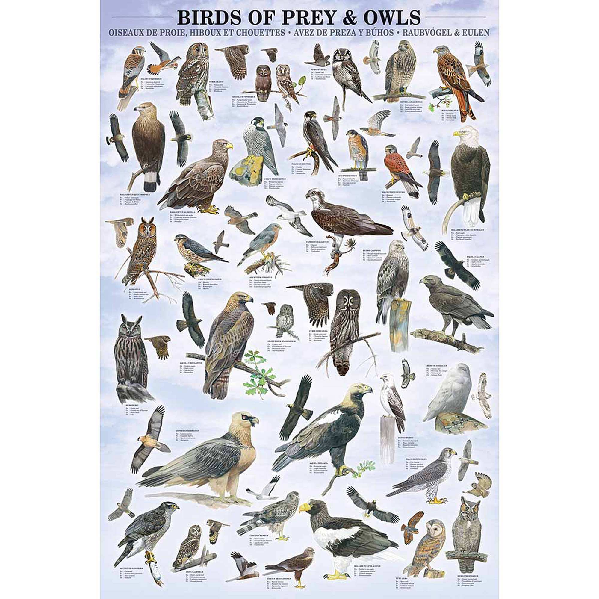 Birds of Prey And Owls Educational Chart
