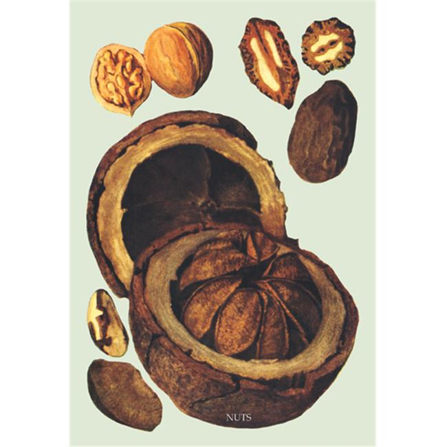 Buy Enlarge 0-587-08338-7P20x30 Nuts no. 1- Paper Size P20x30