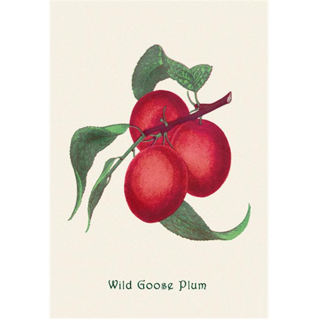 Buy Enlarge 0-587-04155-2P20x30 Wild Goose Plum- Paper Size P20x30