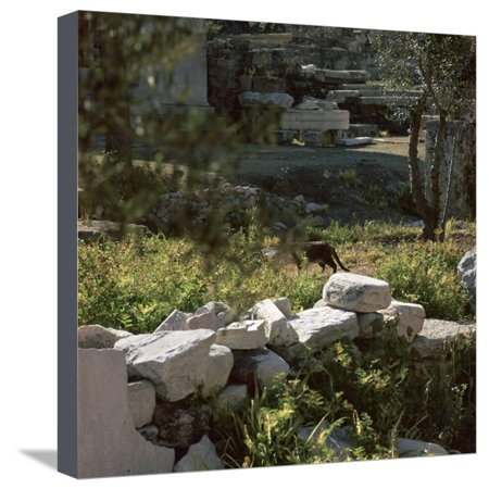Picture of a cat in Athens. Artist: Unknown Stretched Canvas Print Wall Art (Athena Picture)