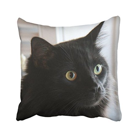 WinHome Halloween Large Eyed Black Cat Pillow Covers Home Or Dorm Throw Pillow Covers Cushion Cover Case 18x18 Inches Pillowcases Two Side - Cat Eyes Window Halloween