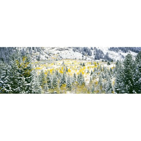 Aspen trees on mountain during snowstorm Teewinot Mountain Grand Teton National Park Wyoming USA Canvas Art - Panoramic Images (27 x 9)