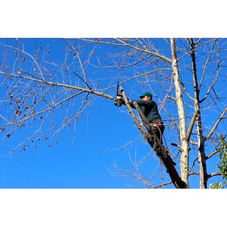 Saw 6 Poster - LAMINATED POSTER Tree Chainsaw Pruning Woodcutter Felling Trimming Poster Print 11 x 17