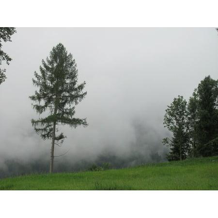 LAMINATED POSTER Fog Glade Pine Critter Poster Print 24 x 36