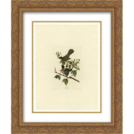 John James Audubon 2x Matted 20x24 Gold Ornate Framed Art Print 'Plate 128 Cat Bird'
