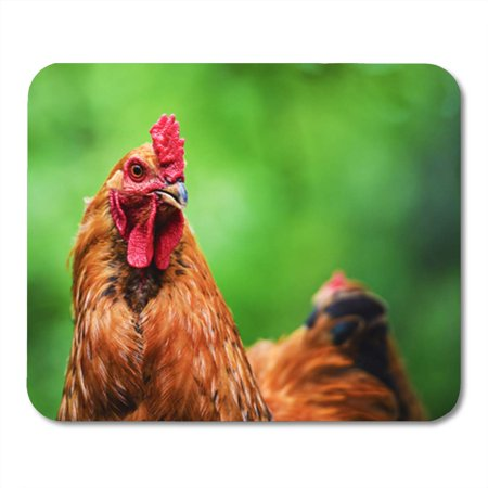 JSDART Green Hen Chicken on Farm Red Organic Agriculture Mousepad Mouse Pad Mouse Mat 9x10 inch - image 1 de 1