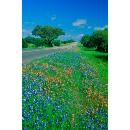 Field of bluebonnets in bloom Spring Willow City Loop Rd TX Poster Print by Panoramic Images (36 x 24) - Halloween Store Spring Tx