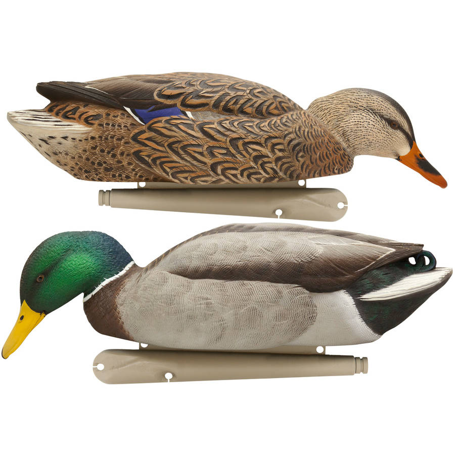 Avian X Top Flight Duck Decoy, Back Water Mallard, Pack of 6