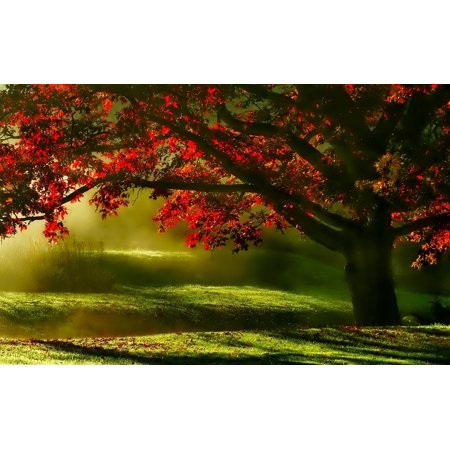 Peel-n-Stick Poster of Scenic Tree Morning Mists Green Landscape Meadow Poster 24x16 Adhesive Sticker Poster Print