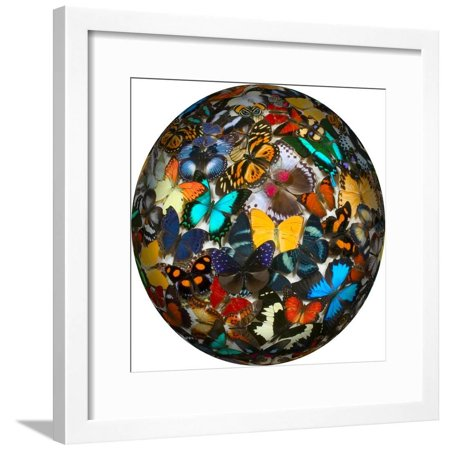 Photoshop designed globe with numerous butterfly photographs Framed Print Wall Art By Darrell Gulin