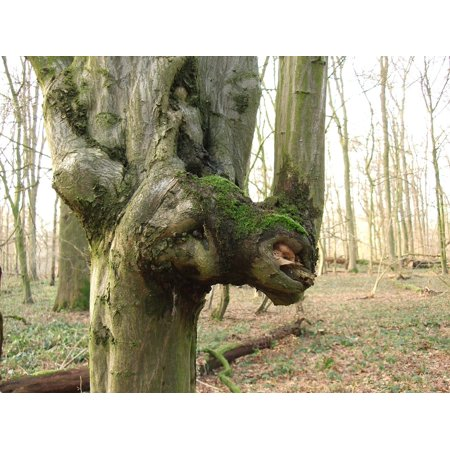 LAMINATED POSTER Tree Tree Spirit Tree Face Nature Spirit Forest Poster Print 11 x 17