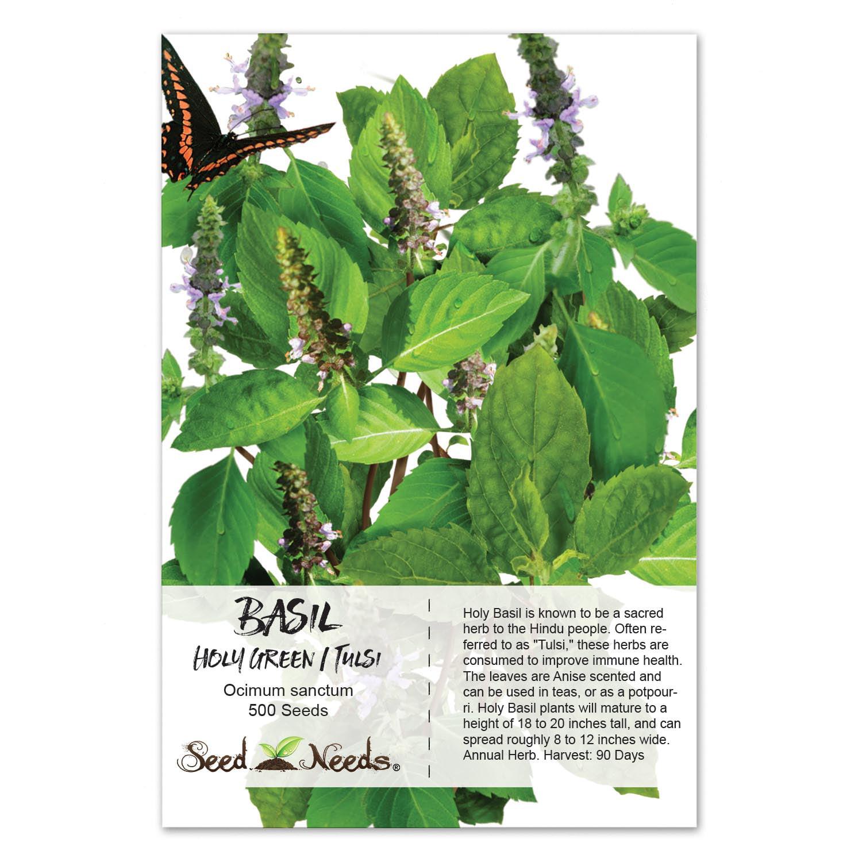 Packet of 500 Seeds, Holy Basil / Tulsi (Ocimum sanctum) Non-GMO