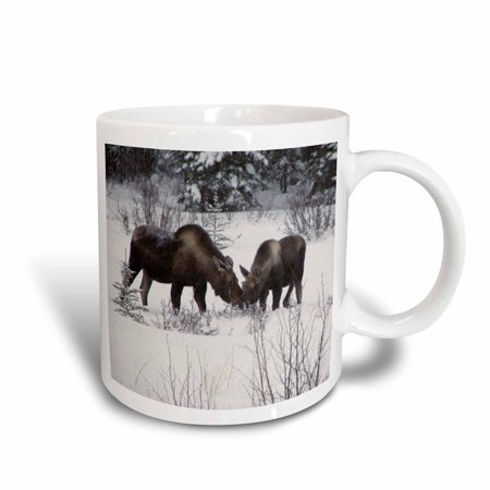 3dRose Moose Cow and Calf Eating Winter Branches in the Snowy Field 1, Ceramic Mug, 11-ounce](Plastic Moose Mugs)
