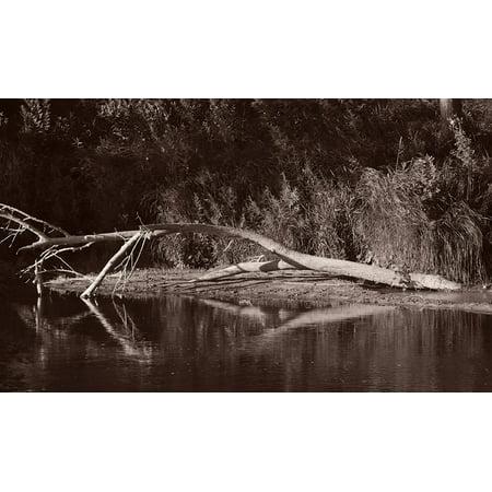 Buffalo River 1-GORSEM85078 Print 6 75