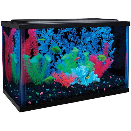 glofish aquarium kit with hood leds and whisper filter 5