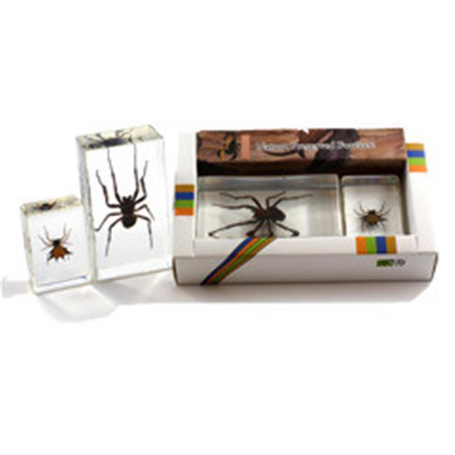 ED SPELDY EAST PWC423 Spider Paperweight Collection - Medium Spider  Small Spiny Spider