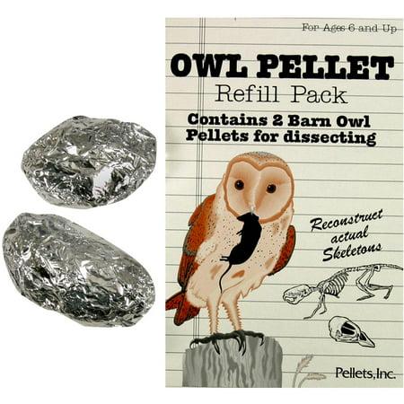 Barn Owl Pellets - Barn Owl Pellet