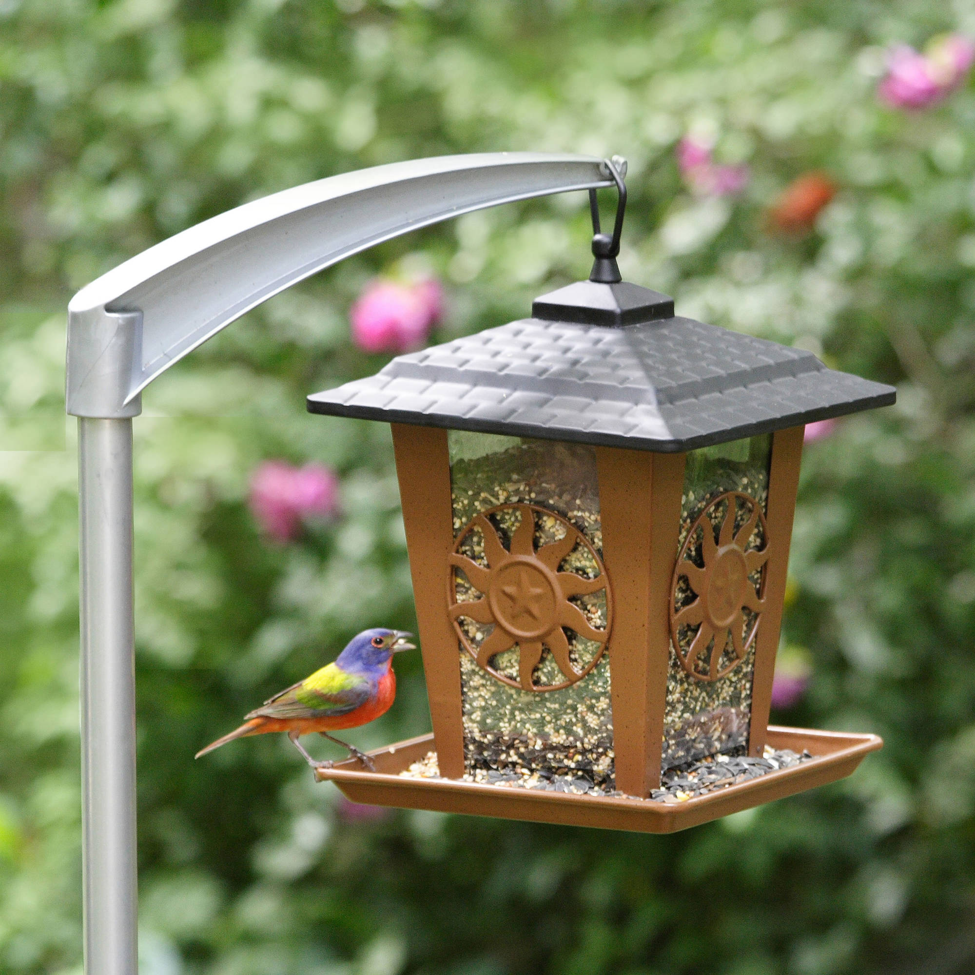 bird birds ground to com img visit the feed brimfields other starlings feeder feeders are
