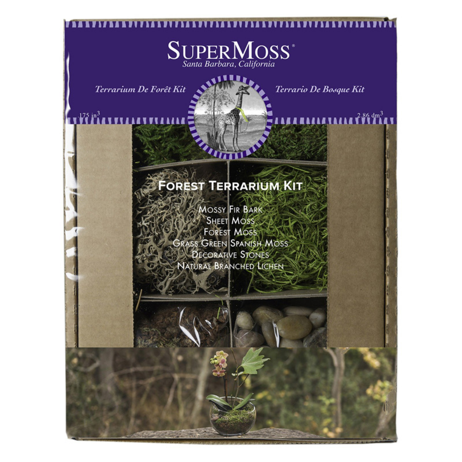 Super Moss 8 oz. Forest Theme Terrarium Kit