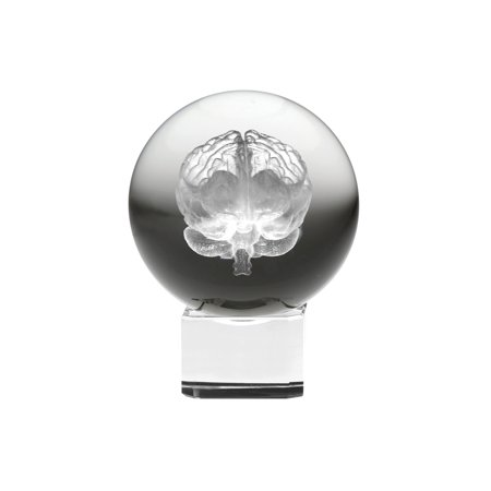 Dynasty Gallery Crystal Sphere with Laser Etched Brain - LED Lighted Base ()