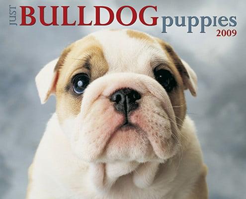 Just Bulldog Puppies Calendar