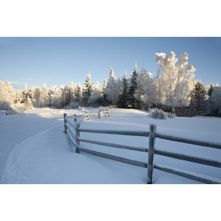 Winter Scenic Of Split Rail Fence And Frosted Spruce And Birch Trees In The Background In Southcentral Alaska Stretched Canvas - Jeff Schultz  Design Pics (34 x (Best Split Pic App)