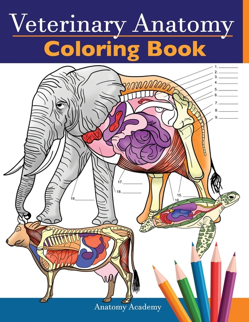 Veterinary Anatomy Coloring Book : Animals Physiology Self-Quiz Color  Workbook For Studying And Relaxation - Perfect Gift For Vet Students And  Even Adults (Paperback) - Walmart.com - Walmart.com