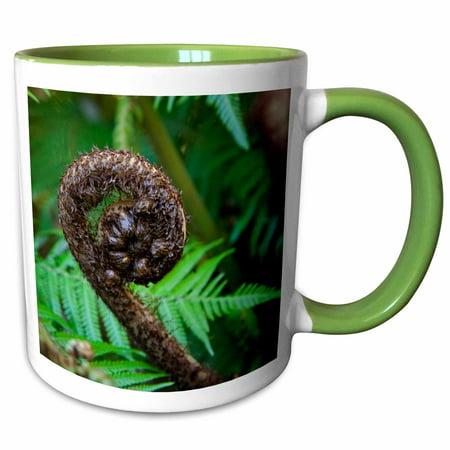 3dRose Tree fern flora, Queen Charlotte, New Zealand - AU02 DPB0087 - Douglas Peebles - Two Tone Green Mug, 15-ounce