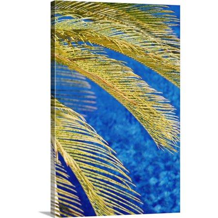 Great BIG Canvas   Giles Caldicott Premium Thick-Wrap Canvas entitled Palm Tree, South Beach, Close Up; Miami, Flroida - Blow Up Palm Trees