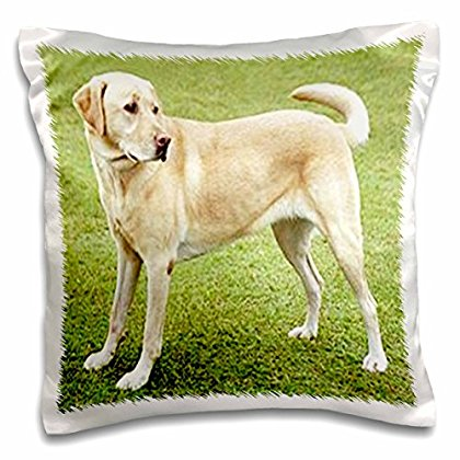 3dRose Yellow Lab on Lawn, Pillow Case, 16 by 16-inch