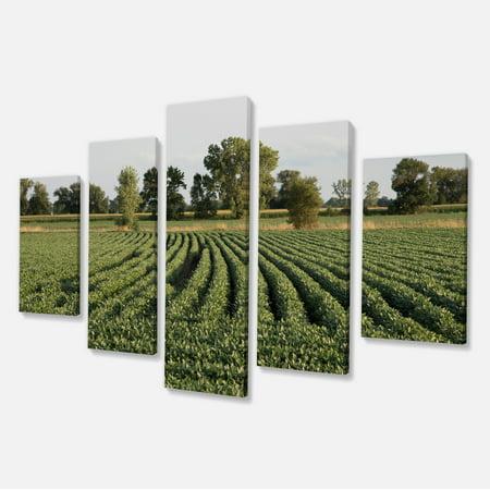 Wisconsin Soybean Field Rows - Landscape Canvas Art Print - image 2 de 3