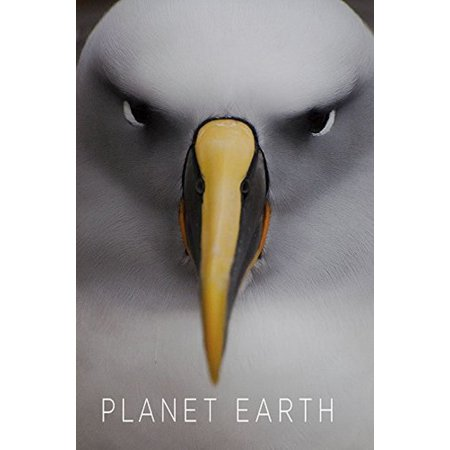 The Planet Earth Collection  Blu Ray