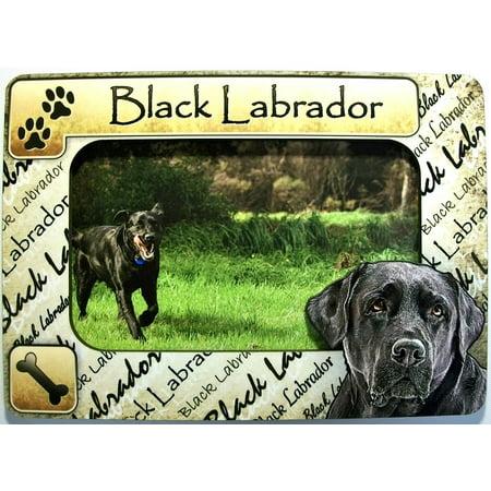Black Labrador Dog Breed Picture Frame Fridge (Black Labrador Dog Pictures)