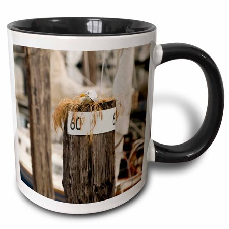 3dRose WA, San Juans, Cap Sante Harbor, Fidalgo Island birds - US48 TDR0423 - Trish Drury, Two Tone Black Mug,