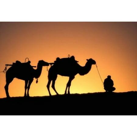 Camel Caravan Silhouette at Dawn Silk Road China Stretched Canvas - Keren Su  DanitaDelimont (18 x 12)