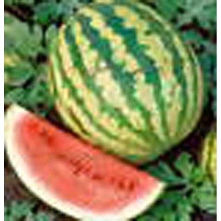 Crimson Sweet - Watermelon Crimson Sweet Great Heirloom Garden Vegetable 200 Seeds