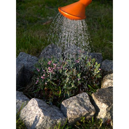 Canvas Print Flowers Gardening Plants Taking Care Watering Stretched Canvas 10 x 14 ()