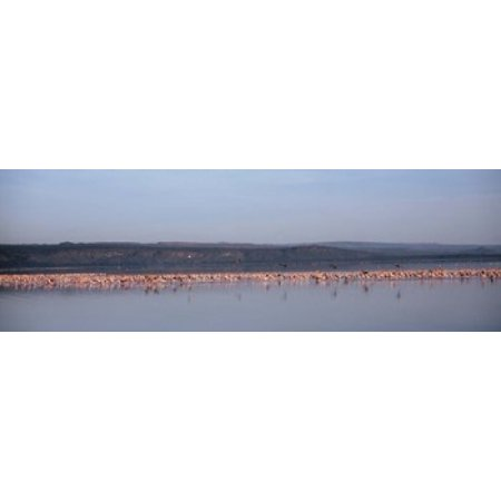 Africa Kenya Lake Nakuru National Park Lake Nakuru Flamingo birds in the lake Poster